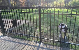 metal fence contractor in Nashville